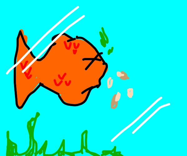 A goldfish vomiting