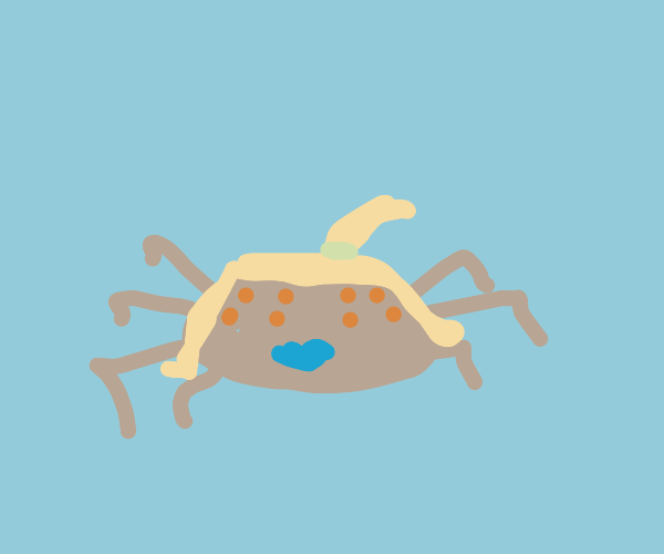 Spider with hair