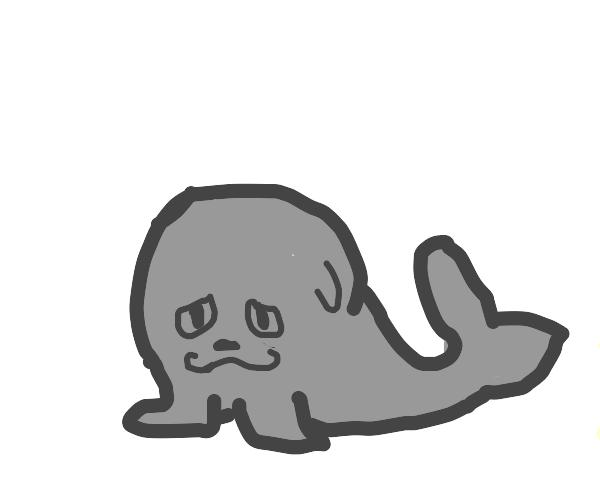 Smug Seal