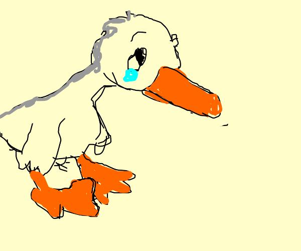 Worried duck!