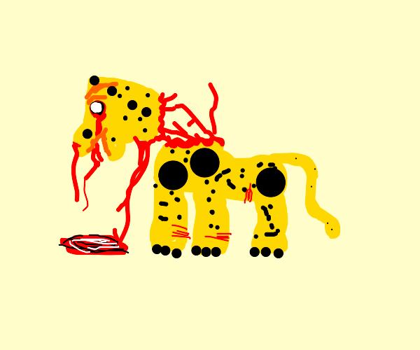 Injured Leopard