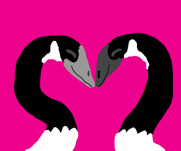 Love geese