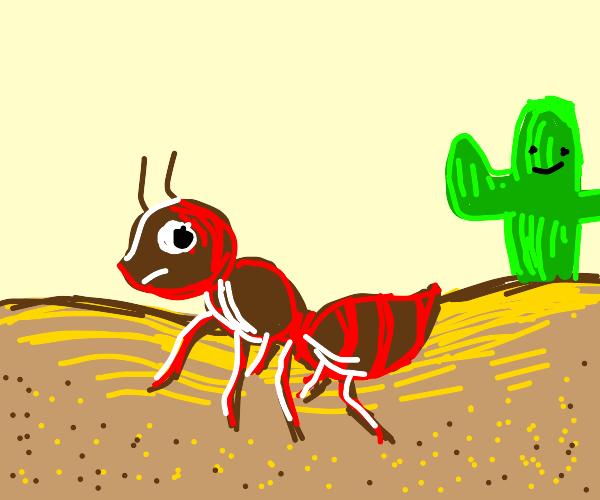 ants on sand