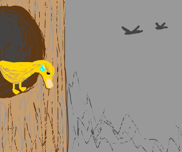 Nervous bird