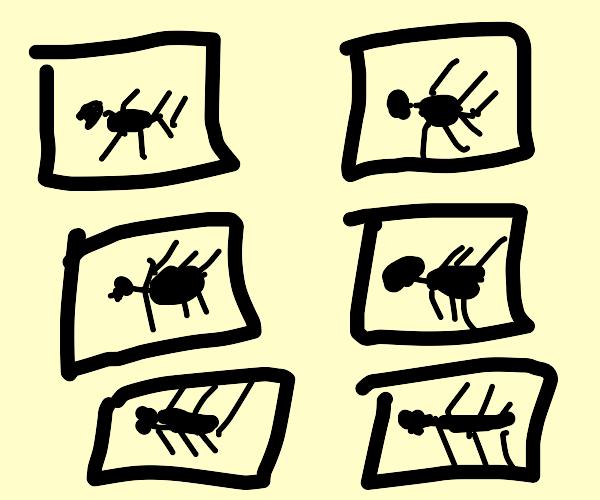 Ant exhbit