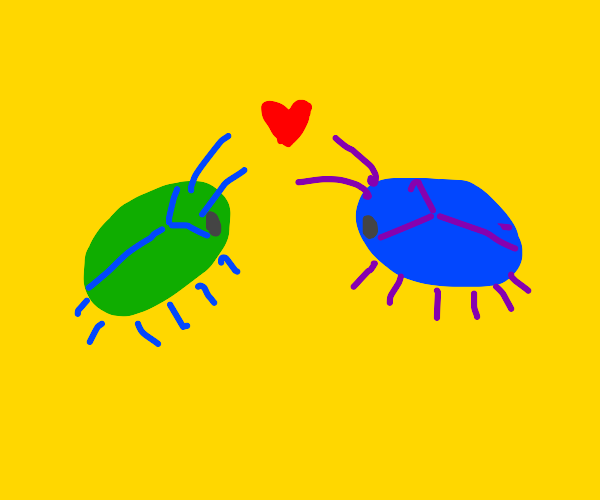 Two bugs fall in love with each other