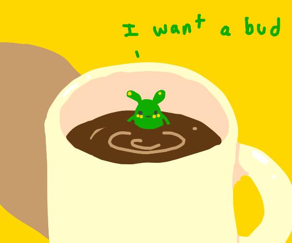 bug in coffee. very sweet. wants a bud