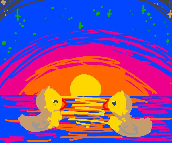 ducks swims into the sunset