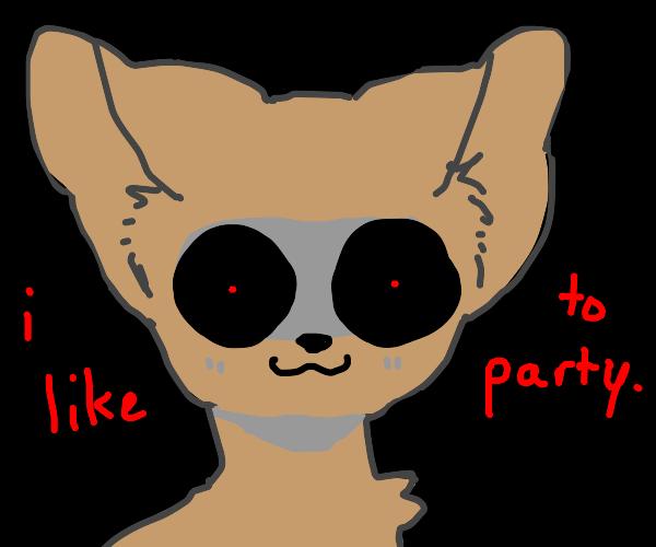 Eerily creepy chiwawa who likes to party