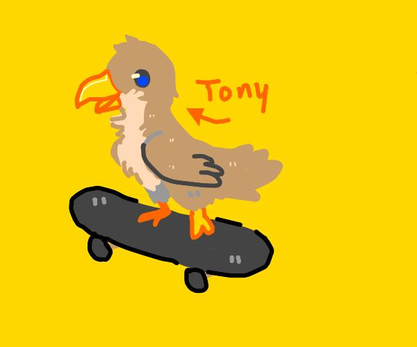Tony the Hawk