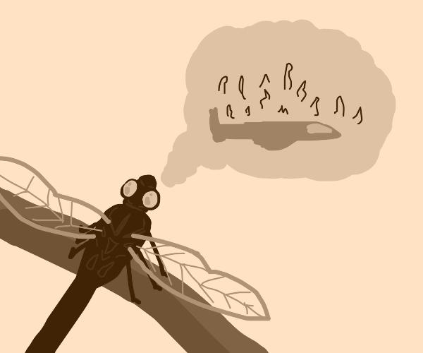 Dragonfly finds plane crash amusing
