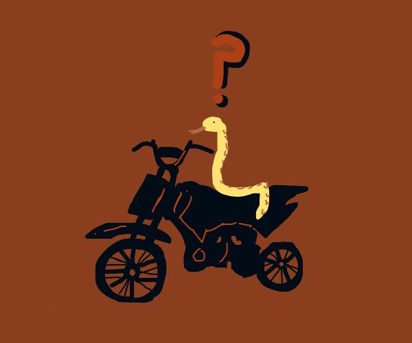 a snake cant drive a motor bike