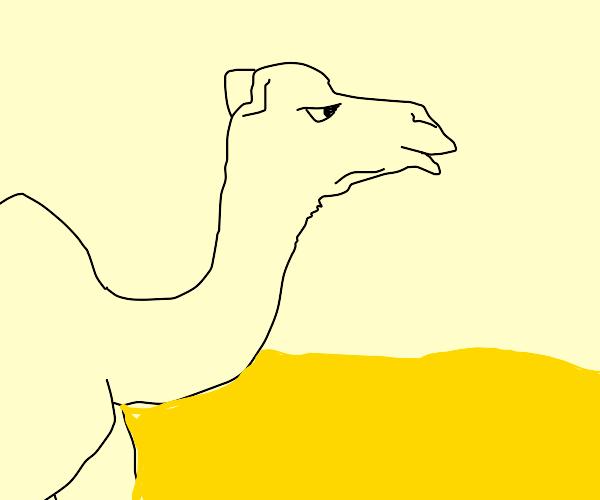 Jealous Camel