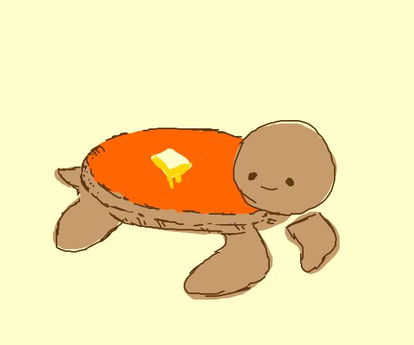 Pancake turtle