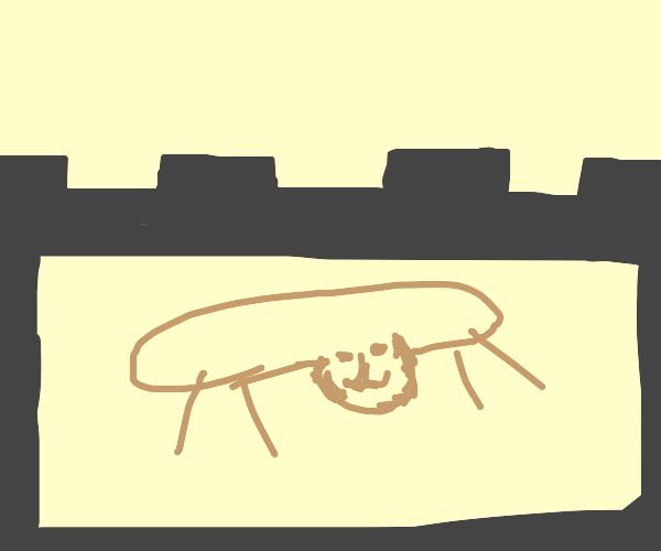 Puma in a Castle