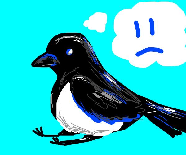 sad magpie