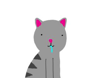 cute derpy cat