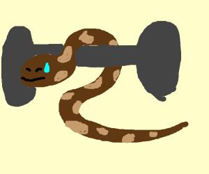 Python Weightlifting