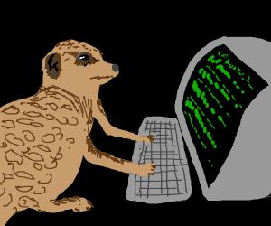 Meerkat Coding