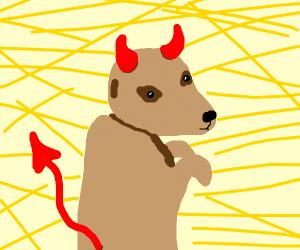 devil meerkat