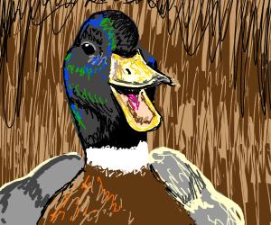 duck quacks