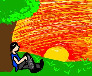 Man sits under tree, watches beautiful sunset