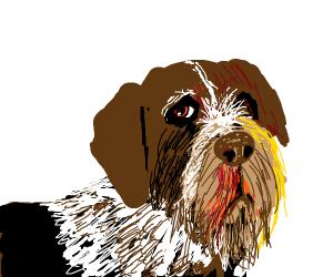 German wirehaired pointer (dog)