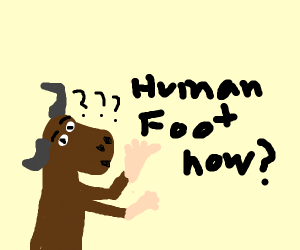 Bull confused by its own human foot.