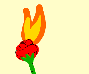 A flaming rose