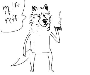 jokester dog