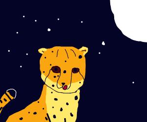 Cheetah at night