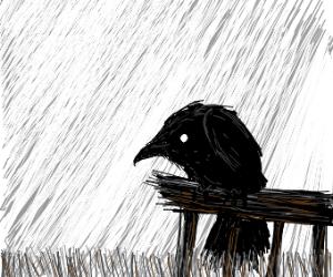 Corvus On The Fence