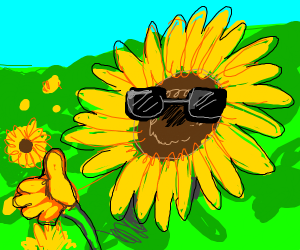 the sunflower being cool as usual