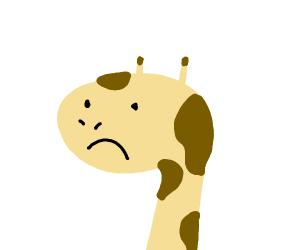 sad giraffe :(