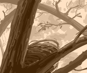 Birbs nest
