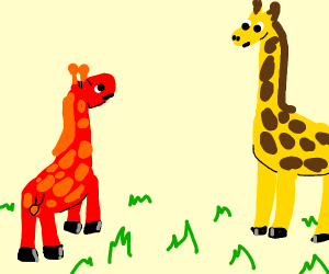 One giraffe is not like the others