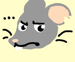 A mildly annoyed rat