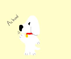 doggo sneezing