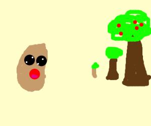 Potato watching trees grow