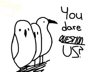 you dare question us birds?