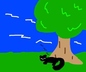 Cat naps under a tree