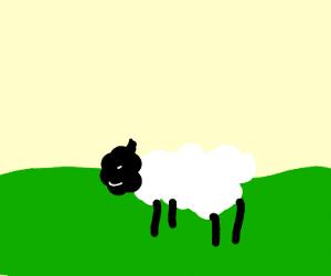 Basic Sheep