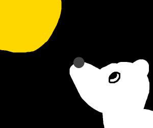 polar bear looking at sun in space