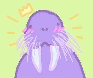 A proud walrus