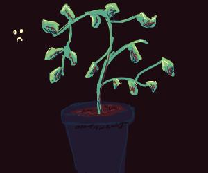 Rotting plant