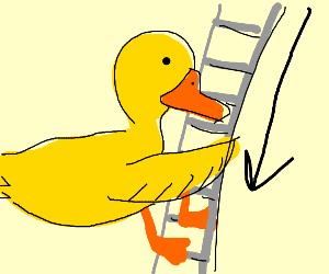 Duck decending large ladder