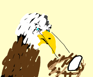 Small Eagle looks over a nest