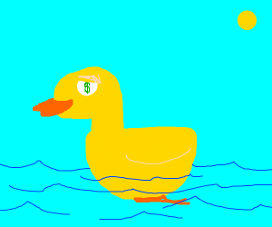 a duck swimming