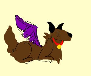 Dog is a Dragon Rider