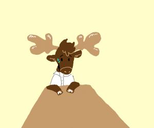 Nervous moose at a job interview